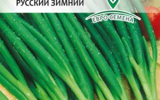 Лук Батун: описание, особенности выращивания и уход