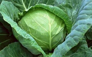 Особенности удобрения капусты, чем подкормить капусту для формирования кочана