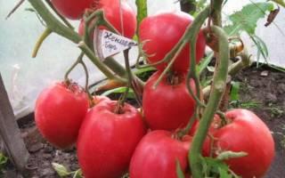 На любой вкус и цвет: урожайный сорт помидоров Кенигсберг