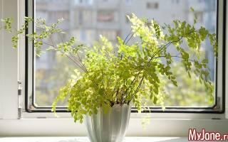 17 комнатных цветков, полезных для здоровья 3