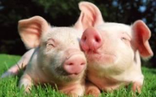 Комбикорм: состав смеси для домашних животных