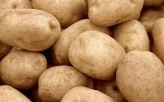 Особенности сорта картофеля «Тулеевский»: описание, качества, выращивание и уход