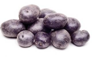 Сорт картофеля «Чёрный принц»: характеристика, агротехника выращивания