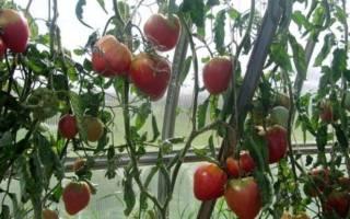 Томат Орлиное Сердце: отзывы, фото, урожайность