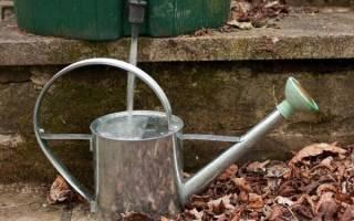 Как часто поливать чеснок в открытом грунте и до какого времени