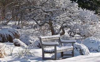 Сезонные работы в саду: уход за садом ранней весной и зимой