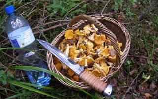 Грибы толкачики: важные советы для грибников
