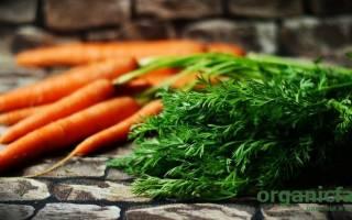 Чем полезна морковная ботва: химический состав и применение