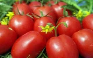 Раннеспелый томат сорта Самара