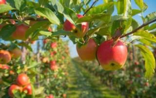 Сравнение эффективности польского и европейского садоводства