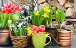 Луковичные комнатные цветы с названиями и фото