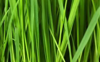 Как правильно посеять газон: общие советы для начинающих дачников