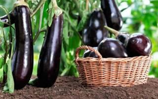 Лучшее время для посева баклажанов на рассаду