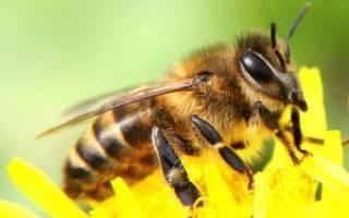 Медовая сыта для пчел