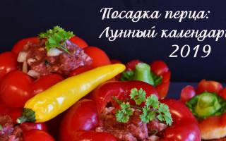 Когда садить перец на рассаду в 2019 году по лунному календарю