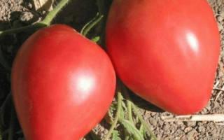 Помидоры Воловье сердце: характеристика, секреты успешного выращивания