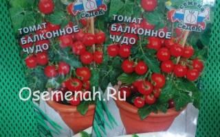 Сорт томата Балконное чудо – описание и фото, отзывы