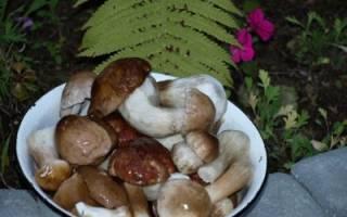 Лучшие рецепты маринованных грибов