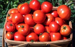 Можно ли вырастить помидоры без полива
