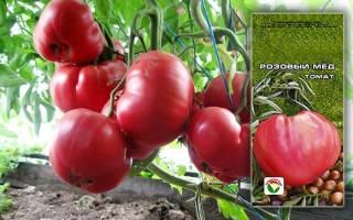 Низкорослые томаты (помидоры) для открытого грунта
