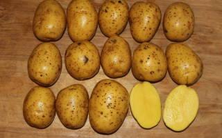 Как вырастить картофель сорта Гала у себя на участке