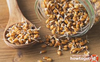 Чем полезны и как правильно принимать пророщенные зерна пшеницы