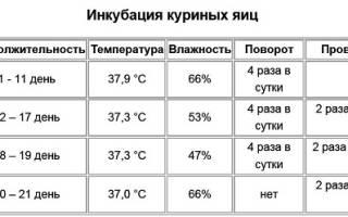 Как измерить и регулировать влажность в инкубаторе