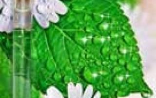 Чистотел – полезные свойства, вред и применение от бородавок