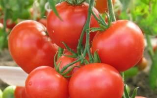 Томаты Любаша f1 – отзывы, фото, урожайность