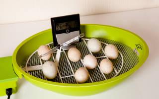 Дезинфекция инкубатора и инкубаторных яиц