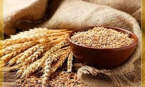 Сорта озимой пшеницы