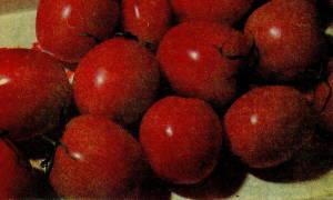 Как вырастить томат де барао на своем огороде