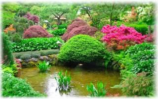 Декоративные растения: названия и примеры