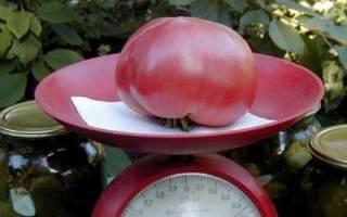 Характеристика томата Розовый гигант