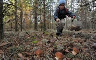 Сбор грибов в Башкирии