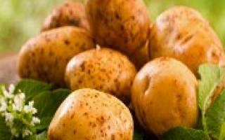 Самые популярные в Украине сорта картофеля