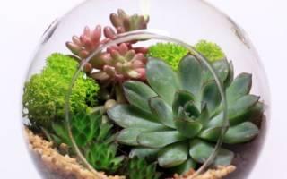 Волшебный сад за стеклом – флорариум своими руками от А до Я