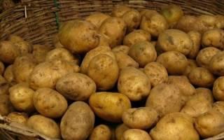 Посадка и уход за картофелем сорта Адретта
