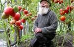 Легко и просто: томаты на Урале