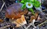 Выращивание грибов в Волгоградской области