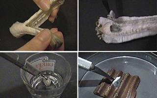 Технология производства мицелия (грибница): как вырастить мицелий в домашних условиях