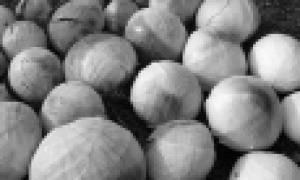 Капуста белокочанная: лучшие сорта для выращивания с описанием и фото