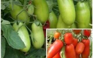 Характеристика и описание томата сорта Перцевидный