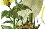 Лечебные свойства корня девясила
