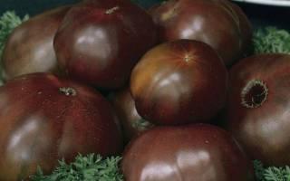 Как вырастить — Черный принц, посадка и уход за — черными — томатами