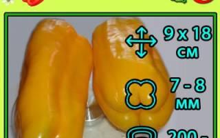 Перец Джемини F1: отзывы дачников, описание особенностей сорта и выращивания