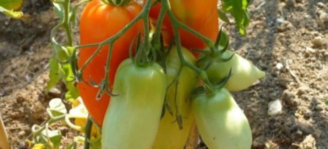 Необычный томат с сочной мякотью и отличными вкусовыми качествами – — Корнабель f1