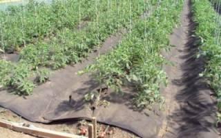 Мульчирование томатов в теплице, как получить большой урожай помидоров
