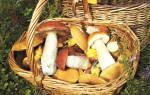 Где собирать грибы в Ленинградской области
