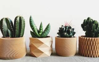 Cуккуленты — фото в интерьере и названия комнатных кактусов